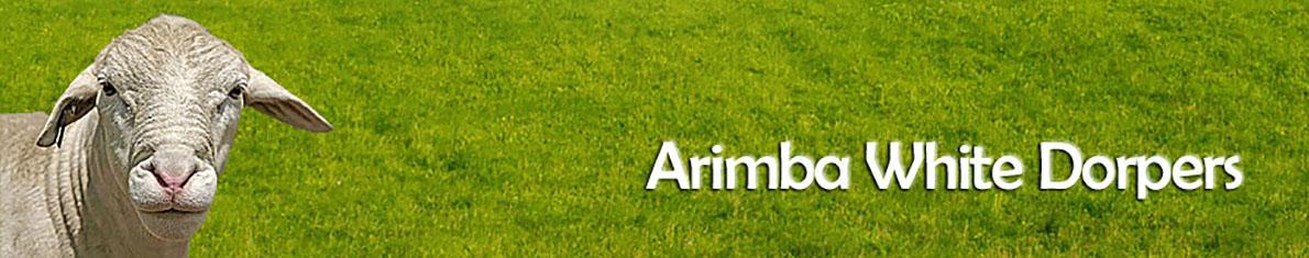 Arimba White Dorpers