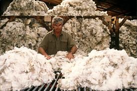 Polwarth fleeces